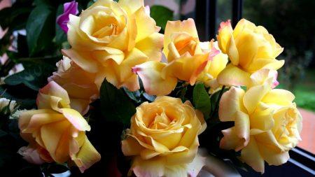 rose, flowing, flowers