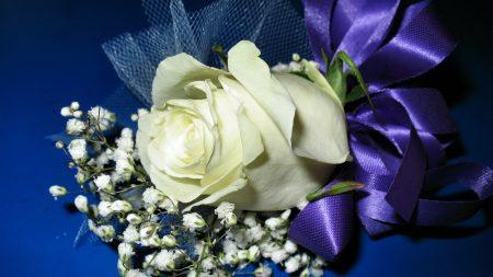 rose, gypsophila, design