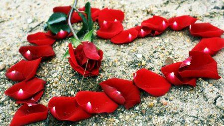 rose, petals, heart