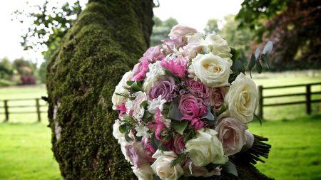 rose, tea tree, flower