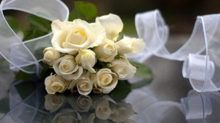 rose, white, flowers