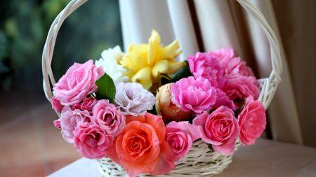 roses, basket, buds