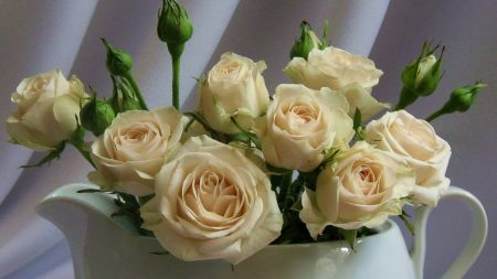roses, bouquet, buds