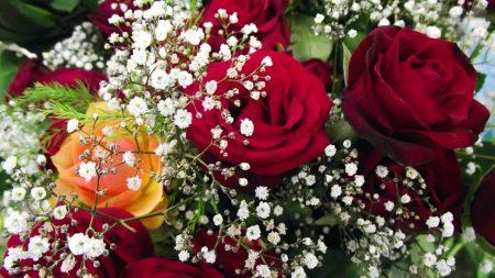 roses, bouquet, gypsophila