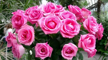 roses, bouquet, pink