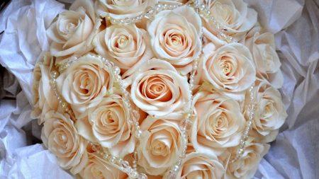 roses, buds, flower