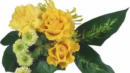 roses, carnations, chrysanthemums