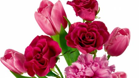 roses, carnations, tulips