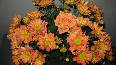 roses, chrysanthemums, flowers