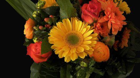 roses, chrysanthemums, ranunkulyus