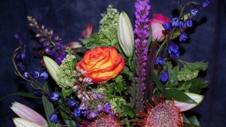 roses, delphinium, proteus