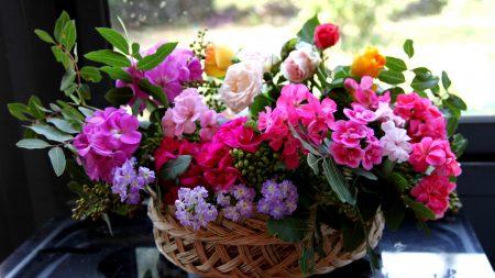 roses, flower, different