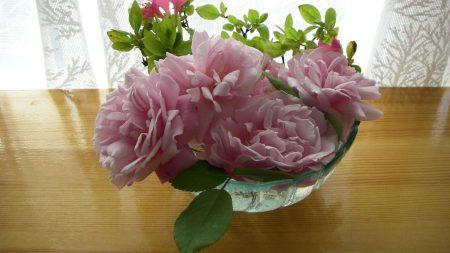 roses, flower, garden