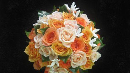 roses, flower, orange