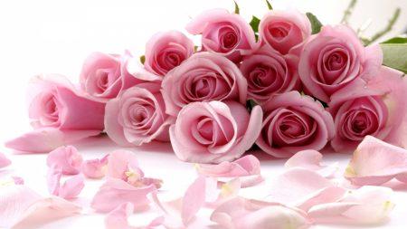 roses, flower, petals