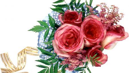 roses, flower, ribbon