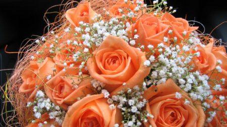 roses, flowers, babys breath