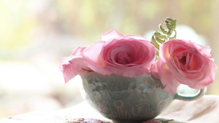 roses, flowers, cup