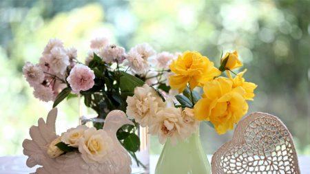 roses, flowers, diversity