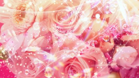 roses, flowers, drops