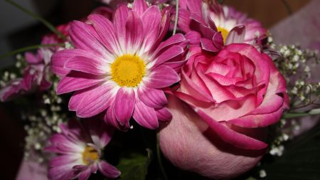 roses, flowers, gypsophila