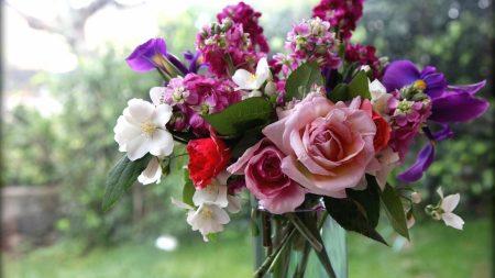 roses, flowers, jasmine
