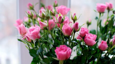 roses, flowers, small