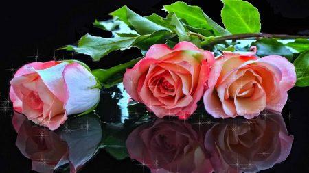 roses, flowers, three