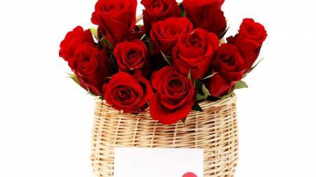roses, flowers, trash