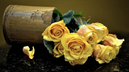 roses, flowers, vase