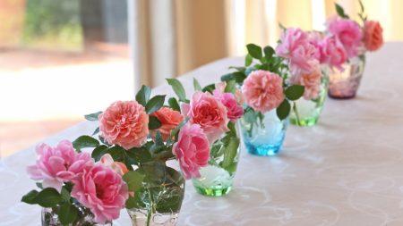 roses, flowers, vases
