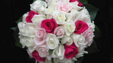 roses, flowers, white