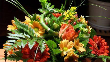 roses, flowers, wildflowers