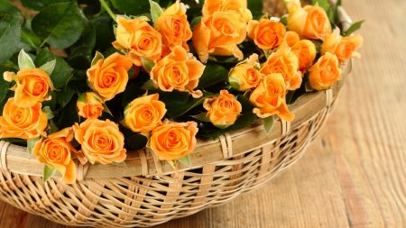 roses, flowers, yellow