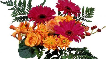 roses, gerberas, chrysanthemums