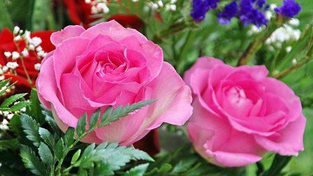 roses, gypsophila, leaves