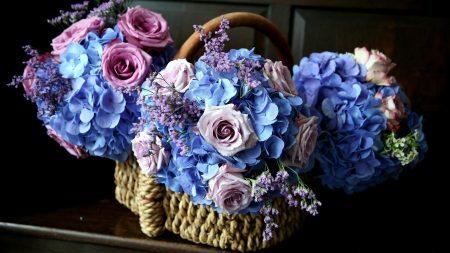 roses, hydrangea, flower