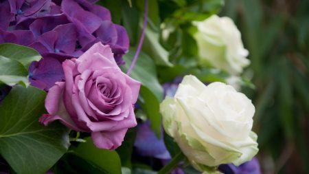 roses, hydrangea, flowers