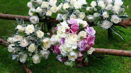 roses, hydrangeas, astrantsiya