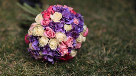 roses, hydrangeas, flower