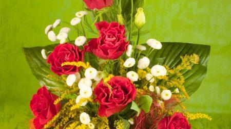 roses, magnolias, flowers