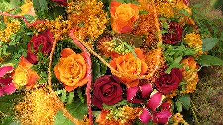 roses, orange, flowers