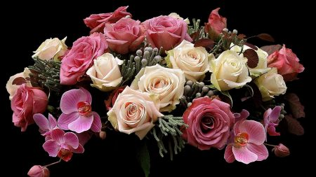 roses, orchids, flowers