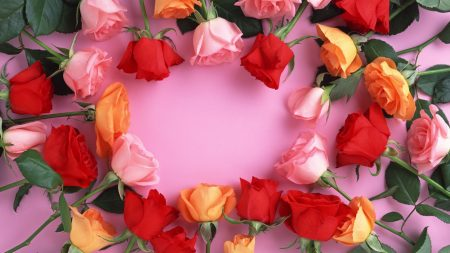 roses, red, pink