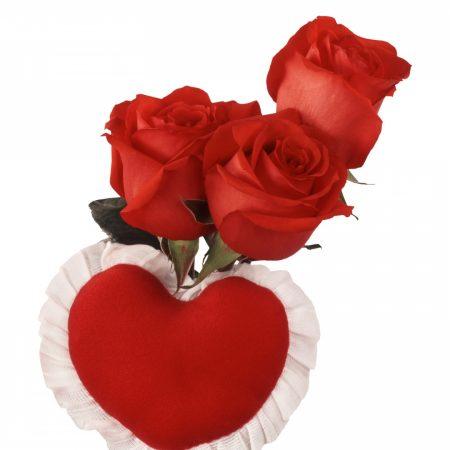 roses, three, red
