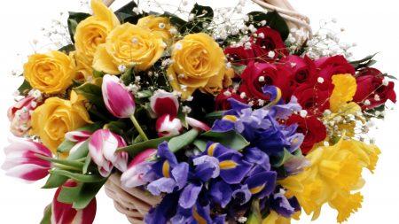 roses, tulips, irises