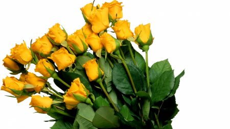 roses, yellow, bouquet