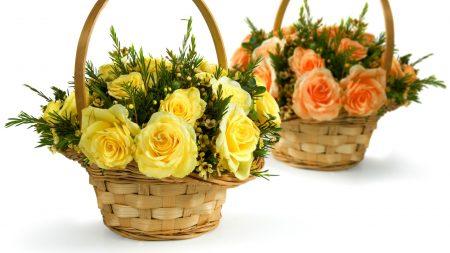 roses, yellow, orange