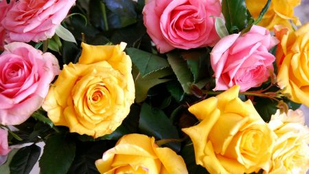 roses, yellow, pink