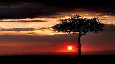 savanna, tree, lonely